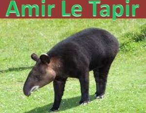 amir le tapir